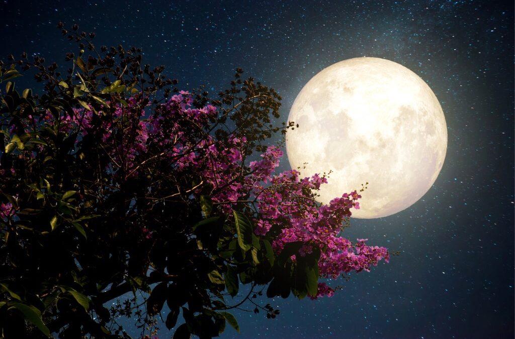 Fullmåne igen